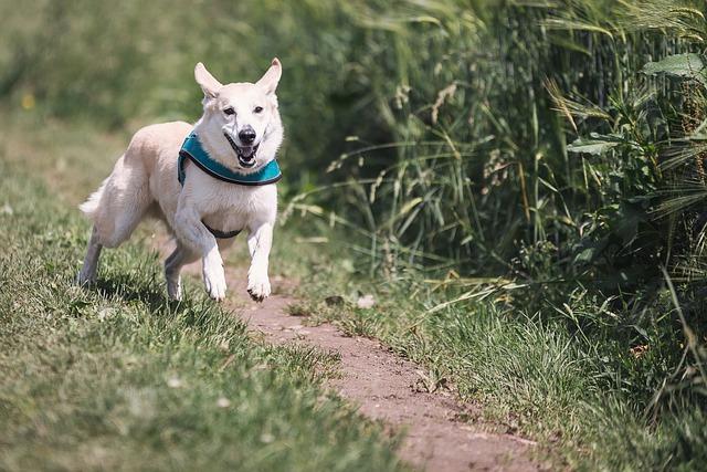 מה לעשות כשהכלב שלך בורח מהבית