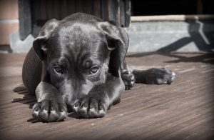 טיפול בקרציות אצל כלבים