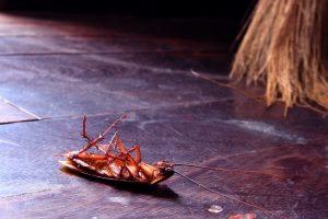 סוגי חרקים ביתיים