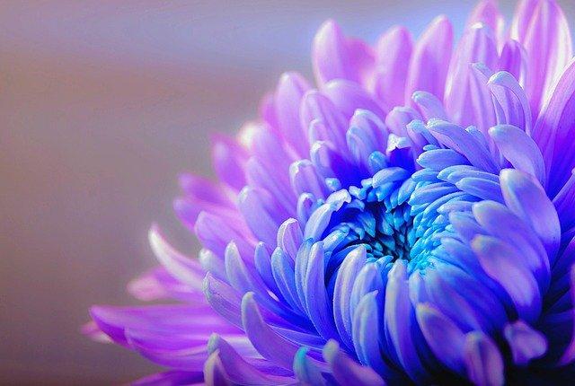פרחים ירושלים