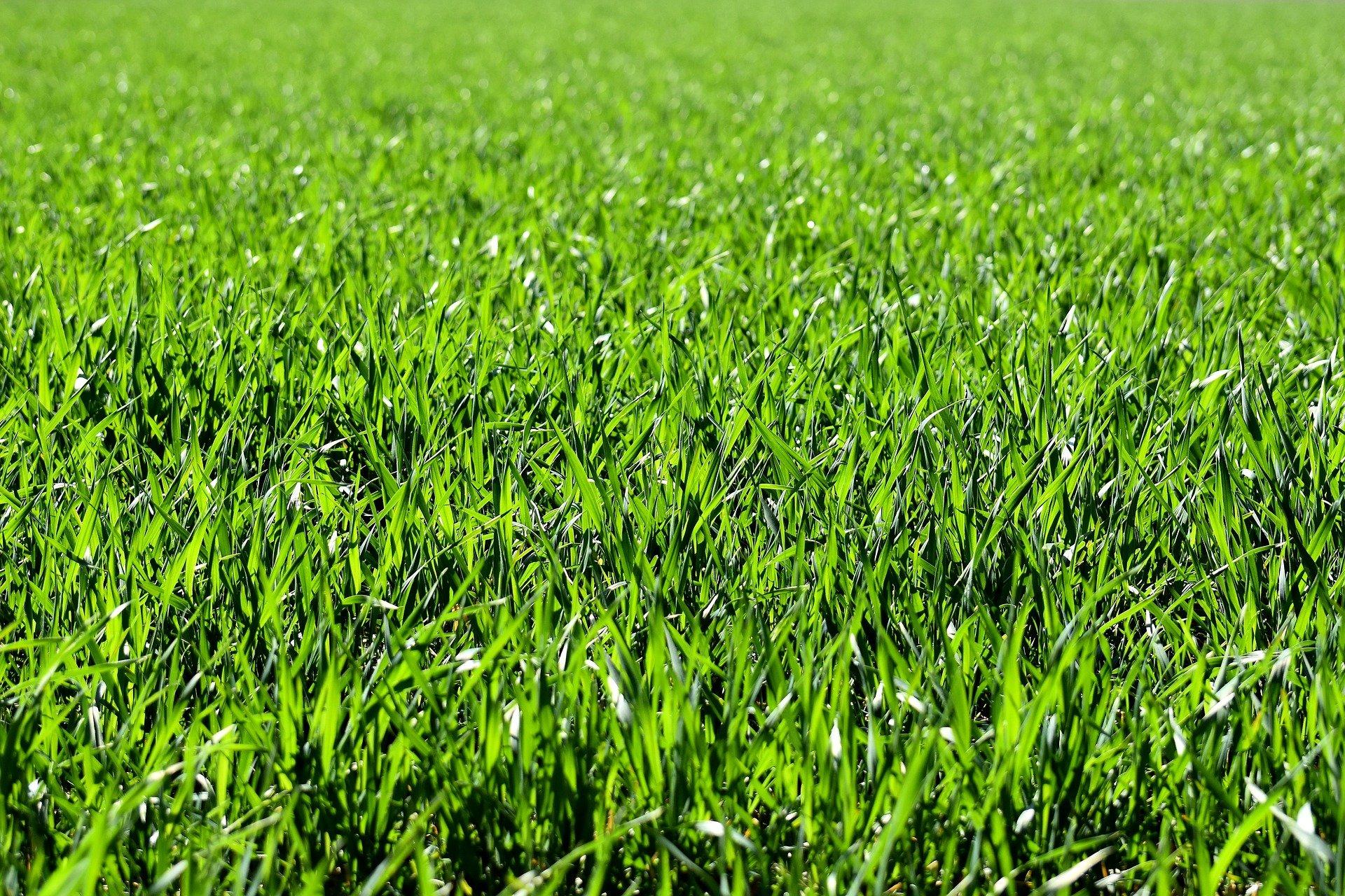 דשא סינטטי – מה ההבדלים בין סוגי הדשא?