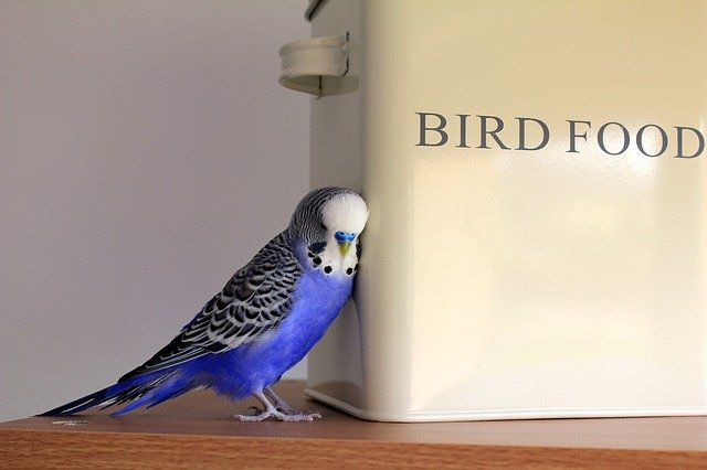 מזון לציפורים – כל מה שחשוב לדעת
